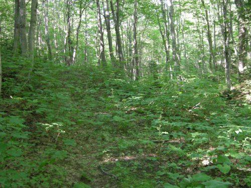 Dans le sous-bois de la Réserve écologique, date : 2009, photo : B.Boucher