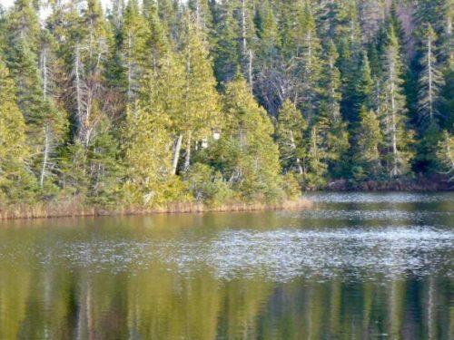 Lac à Cyrille, date : automne 2008, photo : Blandine Mercier