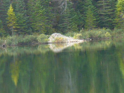 Barrage de castors sur le Premier lac, date : automne 2008, photo : Blandine Mercier