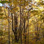Dans la Réserve écologique, date : 2012, photo : Blandine Mercier